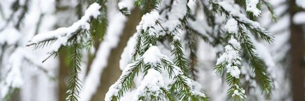 Świerkowa gałąź choinki pokryta jest śniegiem w śnieżnym zimowym lesie