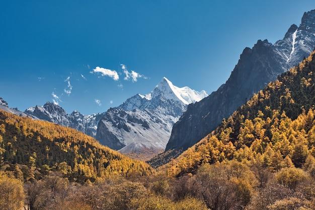 Święta góra chana dorje w jesiennym lesie sosnowym w shangri-la, rezerwat przyrody yading