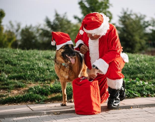 Święty mikołaj bez brody bawi się z owczarkiem niemieckim, który wyciąga go z torby z prezentami. czas świąt