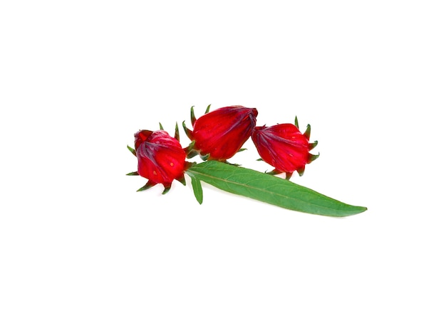 Świeża czerwona roselle z zielonym liściem na białym tle