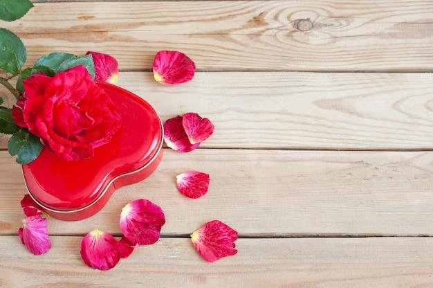 Świeża czerwona róża z płatkami i obecny