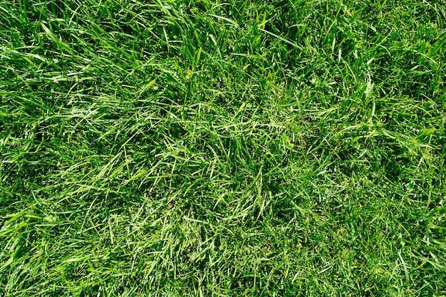 Świeża długa trawa tło pola zielona trawa zielona trawa tło tekstura trawnik