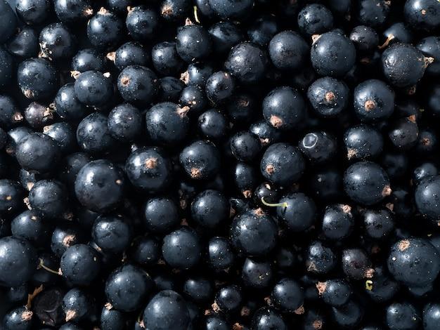 Świeża dojrzała czarna porzeczka. letnie witaminy.