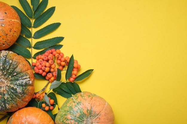 Świeża dynia na żółtym tle, dynia przecięta na pół i kilka dyni w różnych kolorach na żółtych liściach jesienią