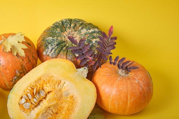 Świeża dynia na żółtym tle, dynia przecięta na pół i niezwykłe dynie na żółtych jesiennych liściach
