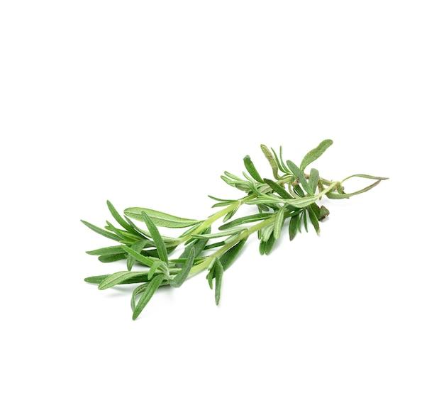 Świeża gałązka rozmarynu z izolowanymi zielonymi liśćmi, aromatyczna przyprawa