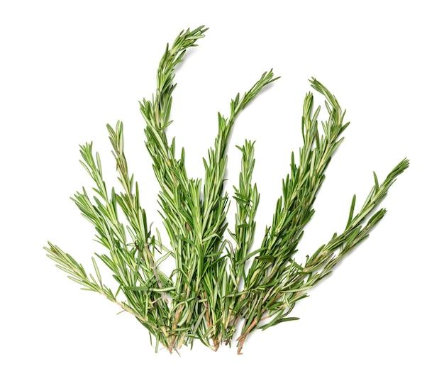 Świeża gałązka rozmarynu z zielonymi liśćmi na białym tle na białej powierzchni, pachnąca przyprawa, widok z góry