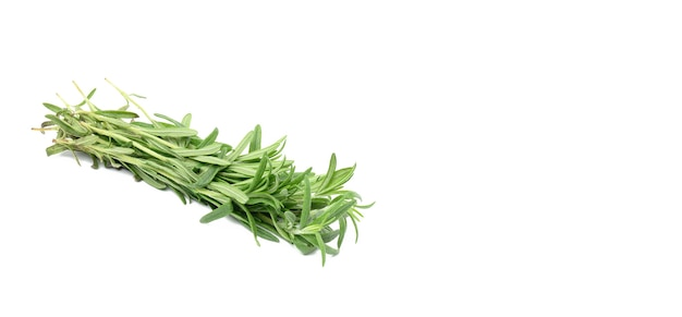 Świeża gałązka rozmarynu z zielonymi liśćmi na białym tle, pachnąca przyprawa, radzi sobie z przestrzenią