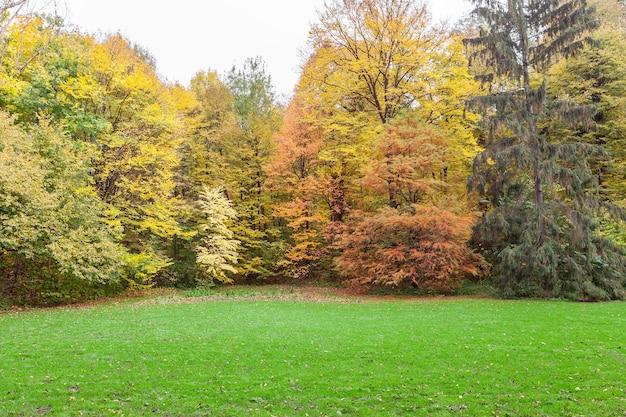 Świeża jesienna zielona trawa polna z niebieskim bokeh