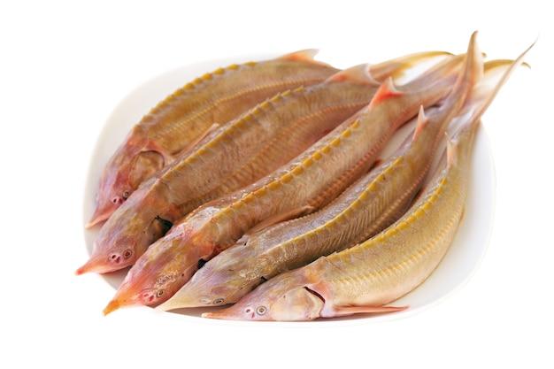 Świeża jesiotr ryba na bielu talerzu. przygotowano świeżego sterletu.