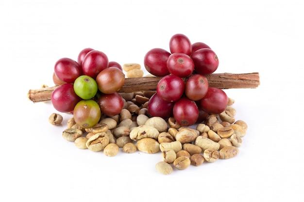 Świeża kawa czerwona jagoda gałąź i kawowe fasole odizolowywający na białym tle