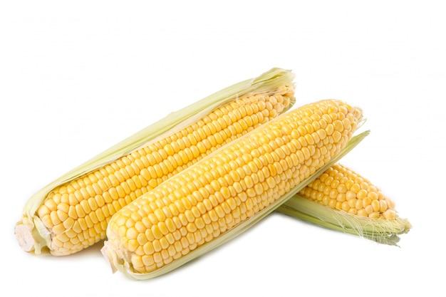 Świeża kukurudza na cobs odizolowywających na bielu