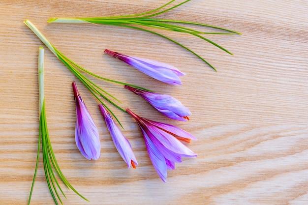 Świeża łodyga szafranu i kwiat na powierzchni drewnianych. skopiuj miejsce. miejsce na twój tekst.