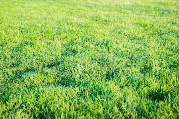 Świeża nieoszlifowana zielona trawa trawnikowa na dziedzińcu, podwórku, ogrodzie