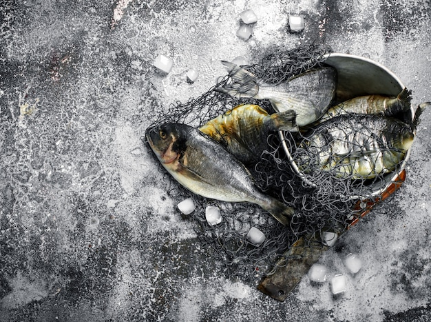 Świeża nieprzygotowana ryba dorado w starym wiadrze z siecią rybacką na rustykalnym stole.