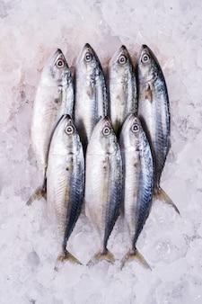 Świeża ocean ryba na lodzie