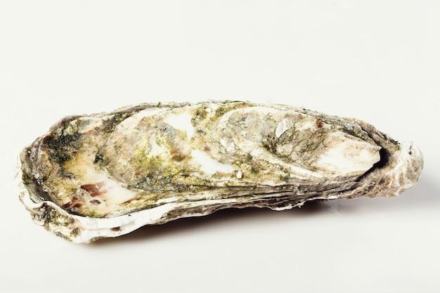 Świeża ostryga