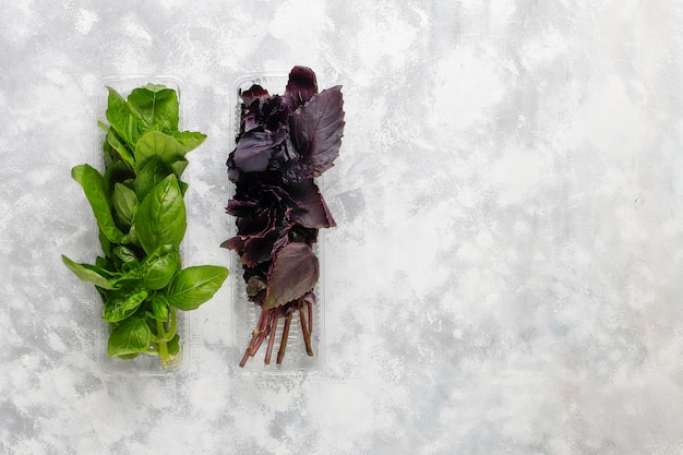 Świeża purpurowa i zielona bazylia w plastikowych pudełkach na szarym betonie