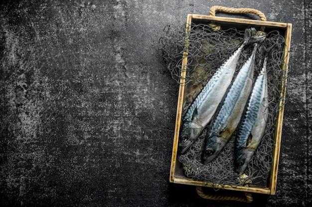 Świeża ryba makrela w pudełku z siecią rybacką. na ciemnym rustykalnym stole