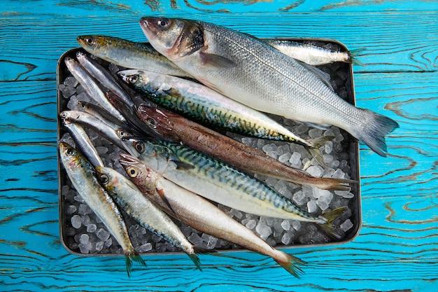 Świeża ryba morszczuka seabass sardynki skumbriowe sardele