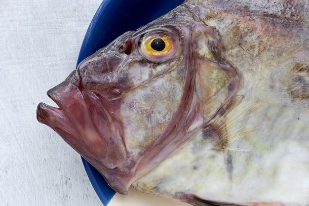 Świeża surowa ryba na naczyniu