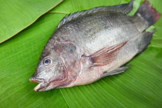 Świeża surowa tilapia ryba na bananowym liściu