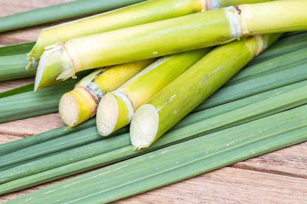 Świeża trzcina cukrowa