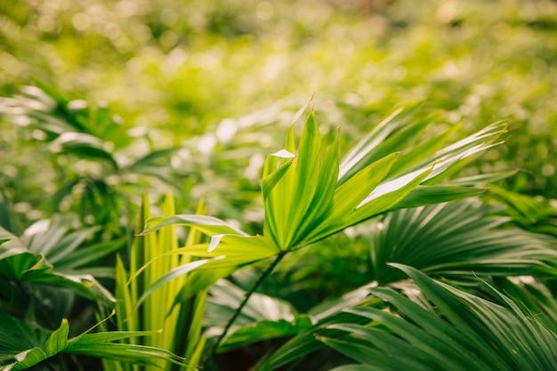 Świeża zieleń opuszcza w ogródzie