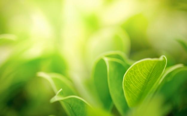 Świeża zieleń opuszcza z kopii przestrzenią, zamazanym bokeh i światła słonecznego tłem ,.