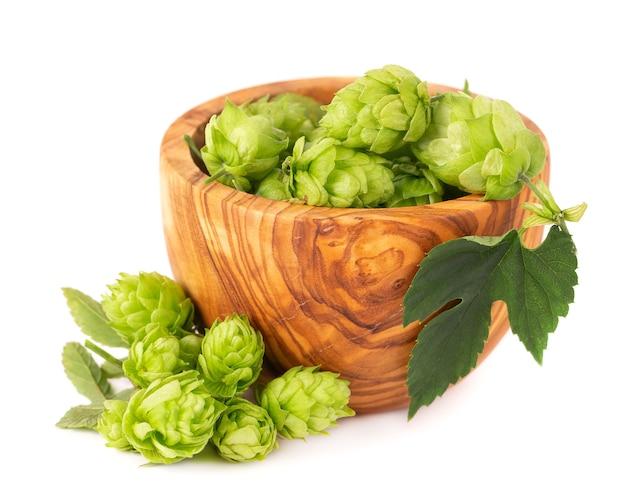 Świeża zielona gałąź chmielu w oliwnej misce na białym tle szyszki chmielowe z organicznym chmielem z liści