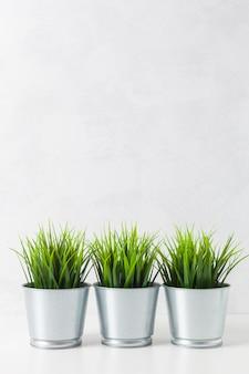 Świeża zielona pszeniczna trawa w garnku