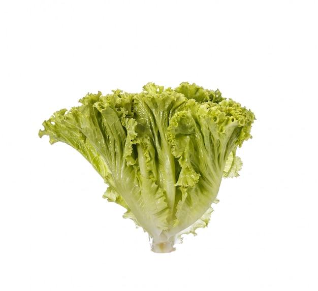 Świeża zielona sałata.