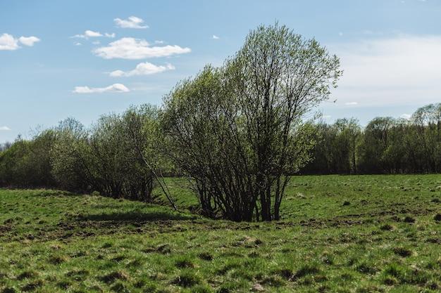 Świeża zielona trawa na wiosennym polu