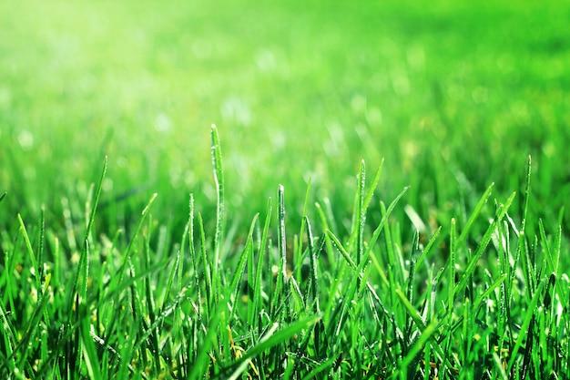 Świeża zielona trawa z rosa kroplami zbliżenie z pięknym bokeh skutkiem.