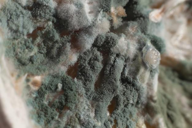 Świeża zielono-niebieska pleśń na plasterku cytryny. makro. zepsuty produkt.