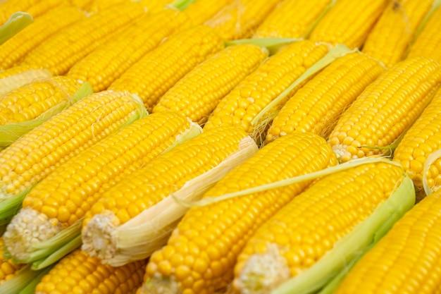 Świeża żółta kukurydza do sprzedaży na targu rolników. jedzenie.