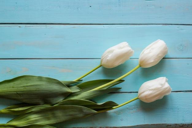 Świeże białe tulipany na deskach pomalowanych na turkus.