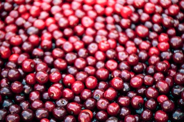 Świeże czerwone jagody wiśnia lub czereśnia, tekstura.