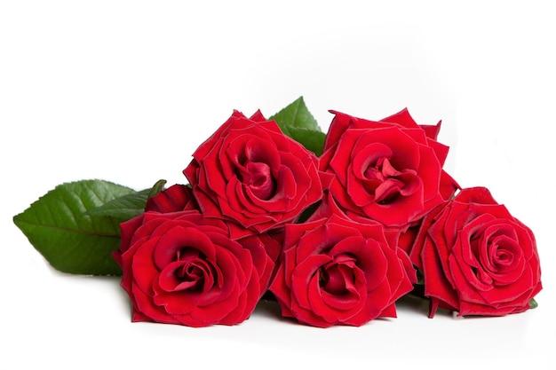 Świeże czerwone róże na białym tle