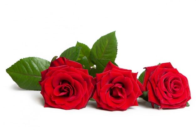 Świeże czerwone róże. piękne kwiaty.