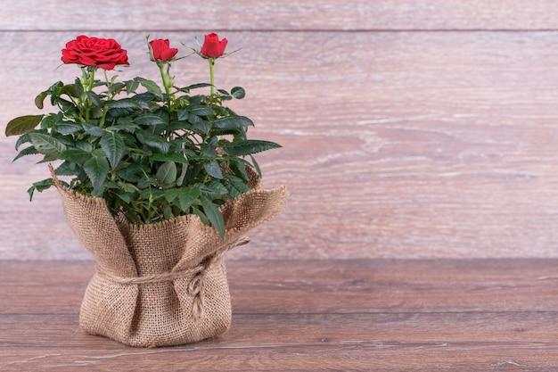 Świeże czerwone róże w torbie na białym tle