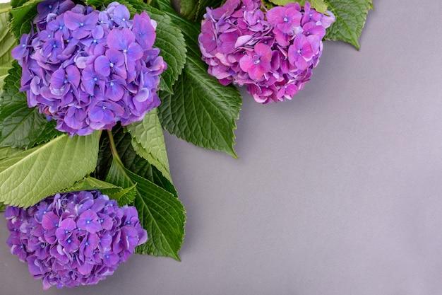 Świeże fioletowe hortensje z zielonymi liśćmi na szarej powierzchni
