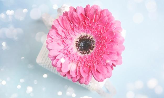Świeże gerbery (daisy gerber). tło wiosna