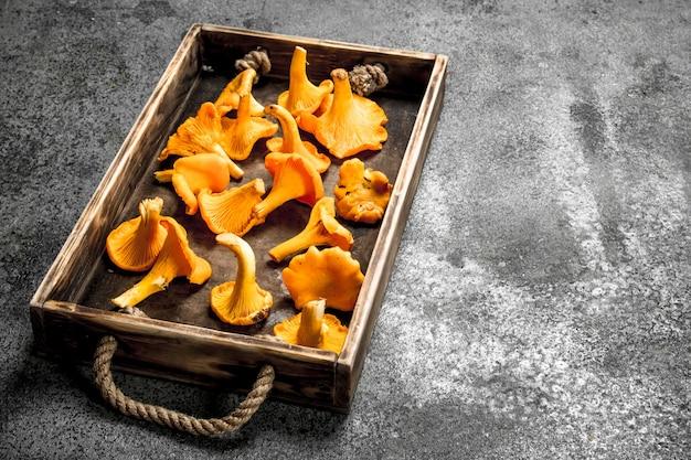 Świeże grzyby kurki na drewnianej tacy.