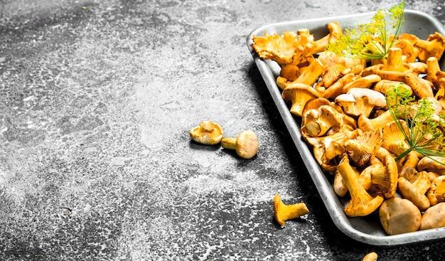 Świeże grzyby kurki na stalowej tacy. na rustykalnym tle.