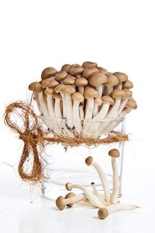Świeże grzyby