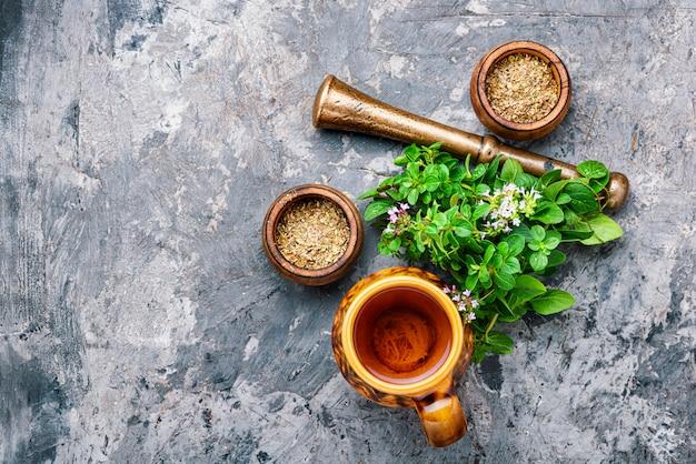 Świeże i suszone zioło oregano