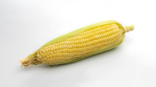 Świeże kłosy kukurydzy na białym tle