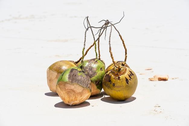 Świeże kokosy na piaszczystej plaży, zanzibar, tanzania, zbliżenie