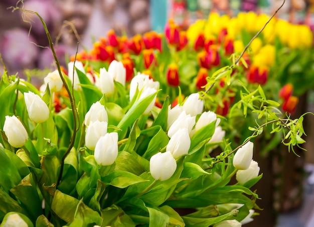 Świeże kolorowe tulipany z rzędu